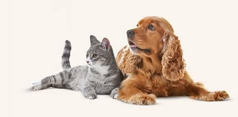 adiestrador perros alicante madagascar mascotas